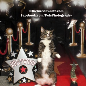 Richie Schwartz Pet Photographer Cat Hollywood